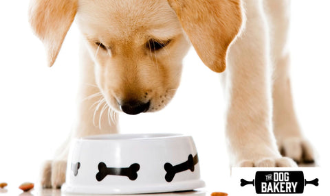 Can Dogs Eat Yogurt?