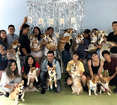 this group of corgi pet parents hosted a dog birthday party for 3 corgis.