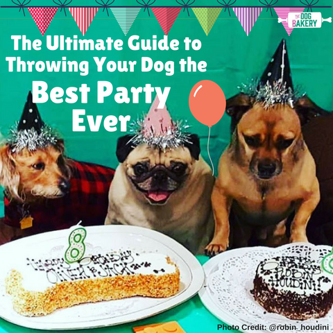 Best Places To Host Your Dogs Birthday Party The Dog Bakery