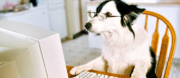 Top Dog Food Blogs to Give Your Pet a Healthy and Happy Life