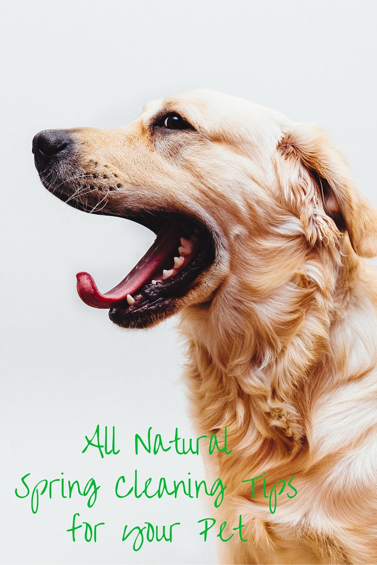 All Natural Spring Cleaning Tips for your Pet