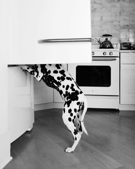 How to keep your dalmatian happy by DOG for DOG