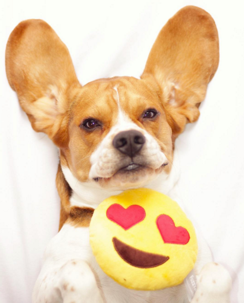 14 ways your dog says I love you
