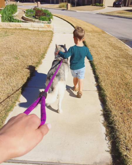 Spring cleaning for dog leashes
