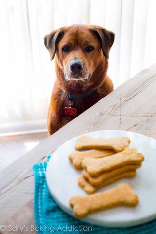 homemade-soft-dog-treats-jude-2