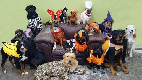 dog Halloween party