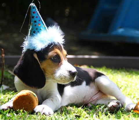 Dog Party Ideas How To Throw A For Your From The