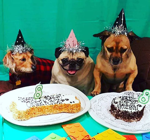 Dog Party Birthday Hats For Dogs Add Some Extra Pizazz To Your Photos