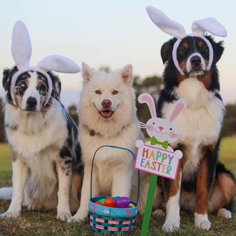 easter egg hunt for dogs