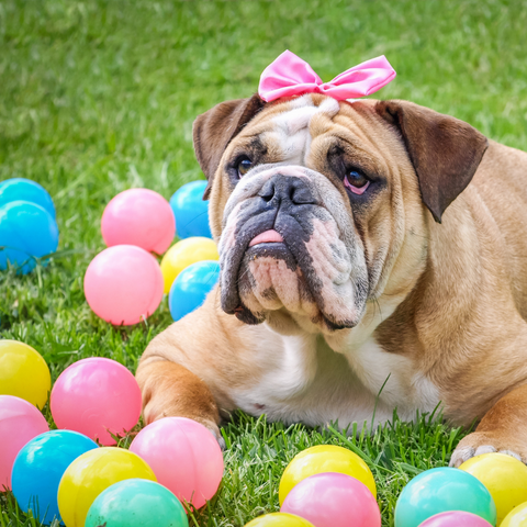 easter party for dogs