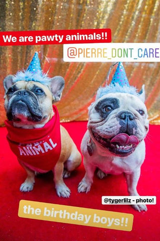 bb478055a8 Dog party ideas- How To Throw A Party For Your Dog- From The dog ...