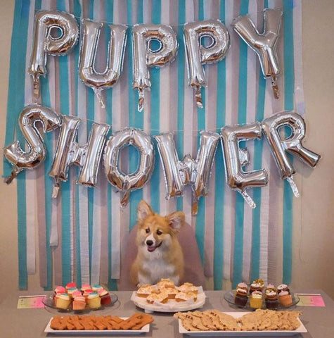 Throw a puppy shower for your dog or for your friend who is getting a new dog
