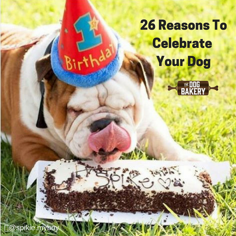 31 reasons to celebrate your dog like their birthday