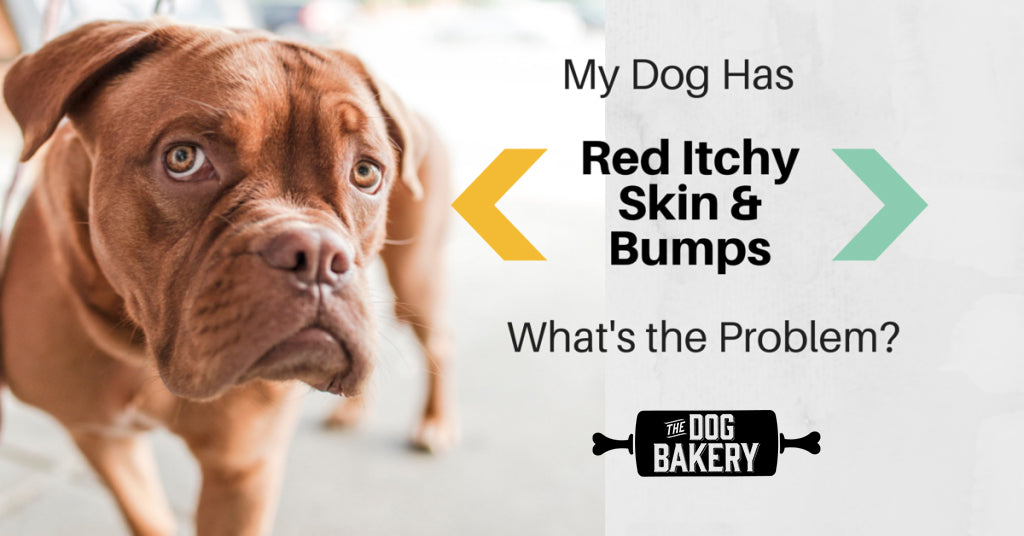 My Dog Has Red Itchy Skin Bumps What Is The Problem The Dog