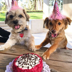 Pssst Sign Up For The Dog Bakerys Birthday Club And Get Discounts On Cakes Other Doggo Delights Bitly TDB