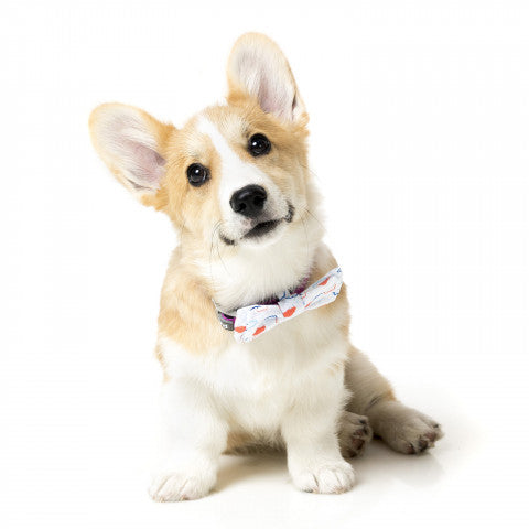 Flying High Pet Bow Tie