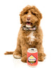 FuzzYard Beer Dog Toy