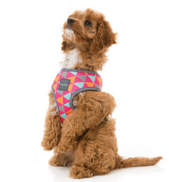 FuzzYard Crush Harness