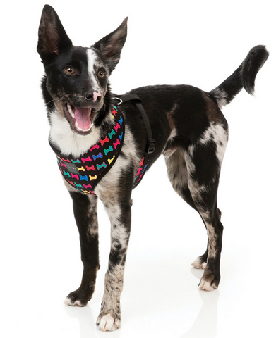 Jelly Bones Harness
