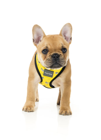 Monkey Mania Harness