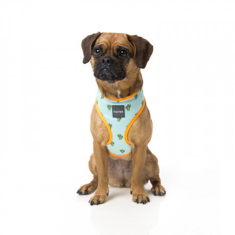 Tucson Dog Harness