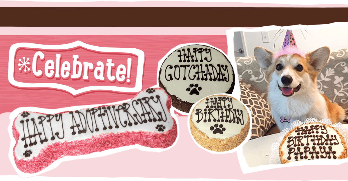 Order Birthday Cake for Dog and Puppy from The Dog Bakery