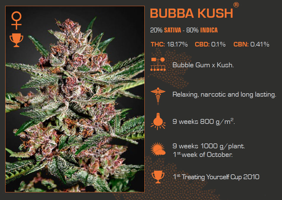 Bubba Kush Feminized 5 Pack