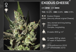 Exodus Cheese Feminized 5 Pack