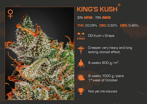King's Kush Feminized 5 Pack