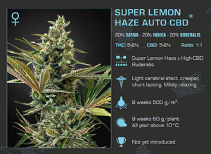 Super Lemon Haze CBD Pack