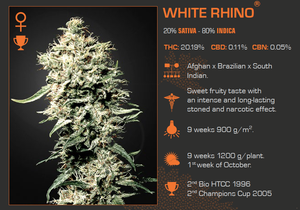 White Rhino Feminized 5 Pack