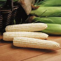 What Kind of Yellow and White Sweet Corn to Plant?