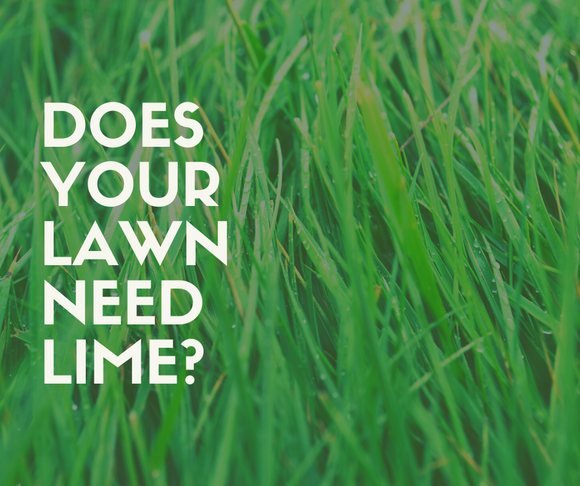 Applying Lime to Your Lawn