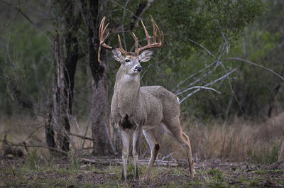 Deer Food Plots: Part II - How to Best Use Deer Food Plots