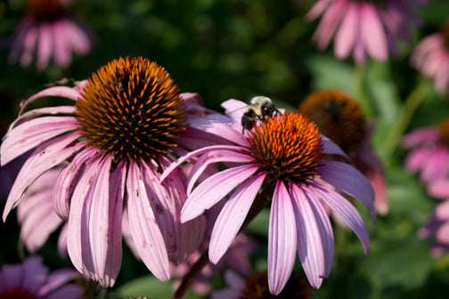 10 Great Pollinator Plants You Can Grow from Seed