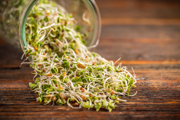 Microgreens vs. Sprouting Seeds