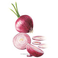 Red Amposta Onion