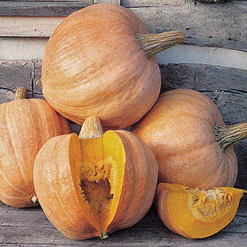 Amish Pie Squash (Pkt)
