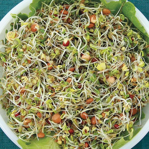 Sprouting Seeds - Spicy Salad