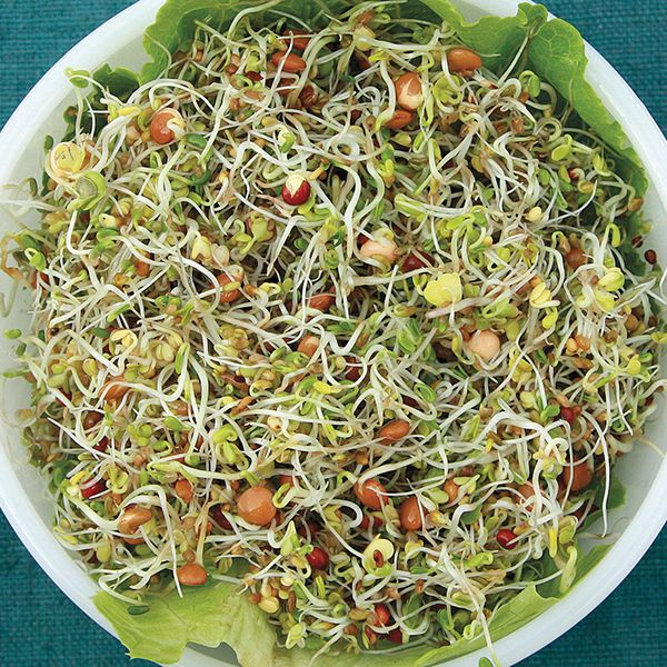 Sprouting Seeds - Sandwich Booster