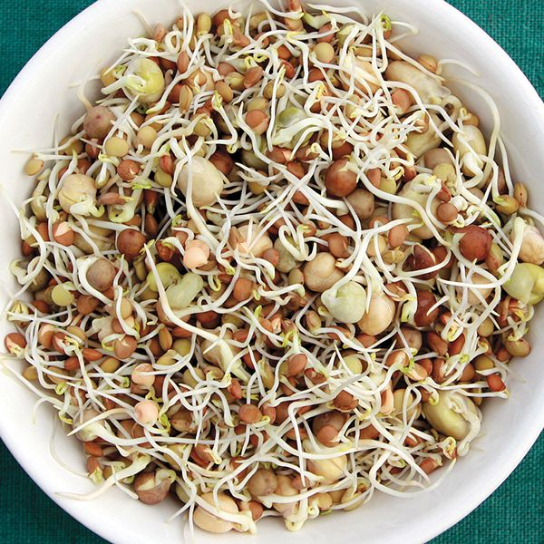 Sprouting Seeds - Crunchy Bean