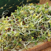 Sprouting Seeds - Broccoli