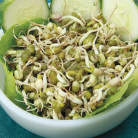 Sprouting Seeds - Mung Bean