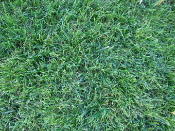 Rohrers Good Turf Lawn Mix