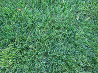 Rohrers Supersport Grass Mix