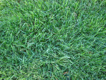 Overtime Tall Fescue Blend