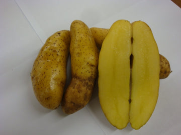 Banana Fingerling Potatoes
