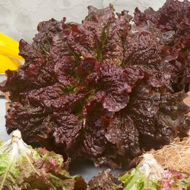 Red Centennial Mix Lettuce