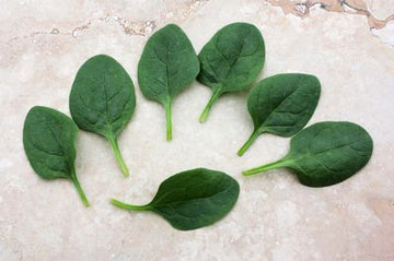 Seaside Baby Leaf Hybrid Spinach