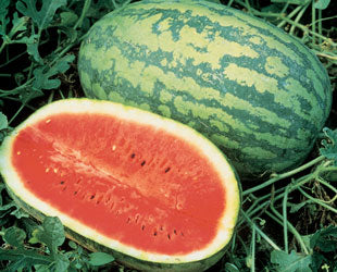 Carolina Cross Watermelon